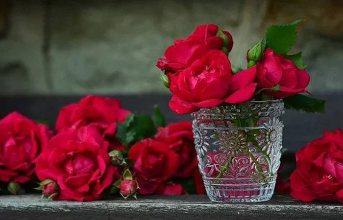 Why Red Rose known as a symbol of love?