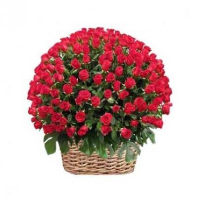 500 Red Roses Basket