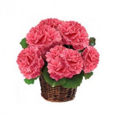 Pink Carnation Basket