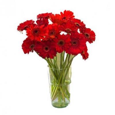 Red Gerbera Vase