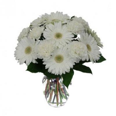 White Gerbera Vase