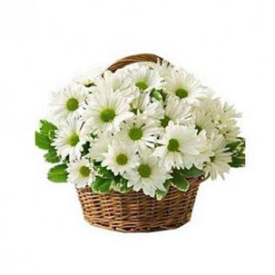 White Gerbera Basket