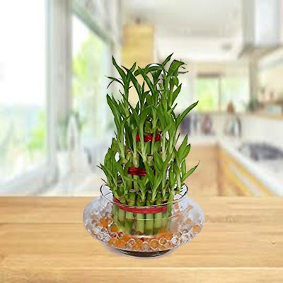 Lucky Bamboo Tirple Layer