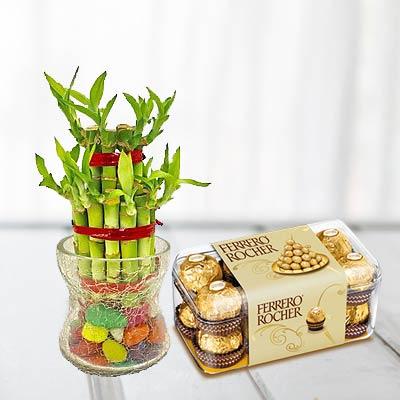 Lucky Bamboo With Ferrero Rocher