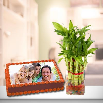 Photo Cake With Lucky Bamboo Plant
